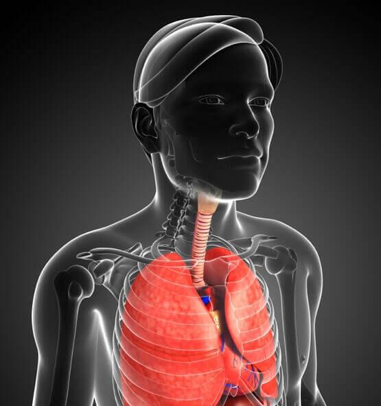 Восстановление легких Восстановление легких Ученые создали легкое со здоровой системой сосудов vosstanovlenie legkih